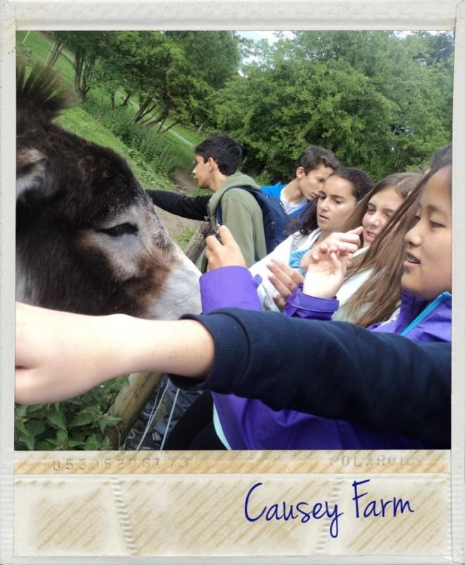 Bienvenidos a Causey Farm.