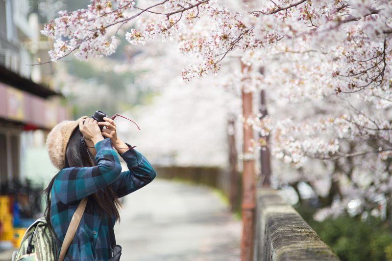 vivir en japón y estudiar japonés